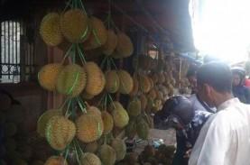 Durian Badui Mampu Dongkrak Perekonomian Masyarakat