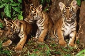 WWF Indonesia Kecewa KLHK Putuskan Kerja Sama