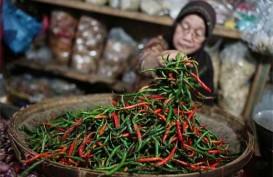 Harga Cabai di Pasar Lelang Pakem Stabil Tinggi