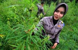 Sempat Usul Legalisasi Ganja, Anggota DPR Rafli Minta Maaf