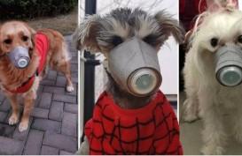 Cegah Penularan Virus Corona, Anjing di China Pakai Masker
