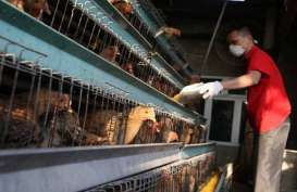 Wabah Virus Corona Belum Reda, China Digempur Flu Burung
