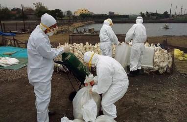 Virus Flu Burung H5N1 di China Bisa Menular ke Manusia