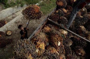 Ekonom: Kontribusi CPO Terhadap Total Ekspor RI Bakal Meningkat