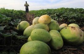 Izin Impor Belum Keluar, Pasokan Importir Buah dan Sayur Menipis