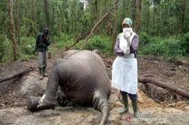Gajah Mati di Bengkalis, BBKSDA Riau Ungkap Penyebabnya