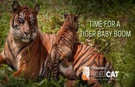 Sumsel Jadi Habitat 17 Ekor Harimau Sumatra