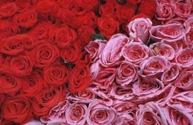5 Pilihan Bunga untuk Hadiah di Hari Valentine