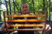 Warga Sekitar TN Bukit Tiga Puluh Biberi Pelatihan Budidaya Lebah