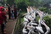 Jumlah Spesies Burung di Indonesia Bertambah, Kini Totalnya 1.794