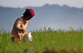 Petani di Madiun Khawatirkan Pemangkasan Kuota Pupuk Bersubsidi