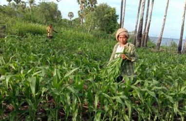 4 Titik Brigade Pestisida Disiapkan untuk Basmi Hama Ulat Grayak