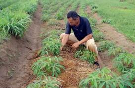 Pusri Jamin Pasokan Pupuk bagi Petani di Lampung