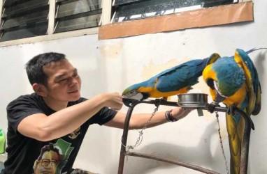 Persahabatan Daniel dan Burung Paruh Bengkok
