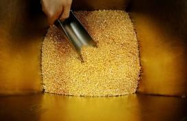 Penemuan Cadangan Emas di NTB, Perekonomian Setempat Cerah