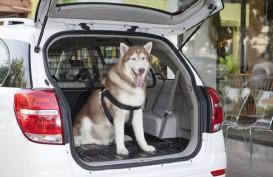 5 Alasan Pebisnis Harus Memiliki Anjing