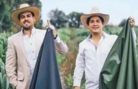 Dua Pengusaha Meksiko Ciptakan Kulit Sintetis dari Kaktus