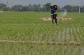 Indeks Nilai Tukar Petani Bali Meningkat 0,37 Persen
