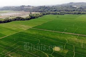 Pemprov Jateng: Kawasan Pangan Ditetapkan 1,02 juta…