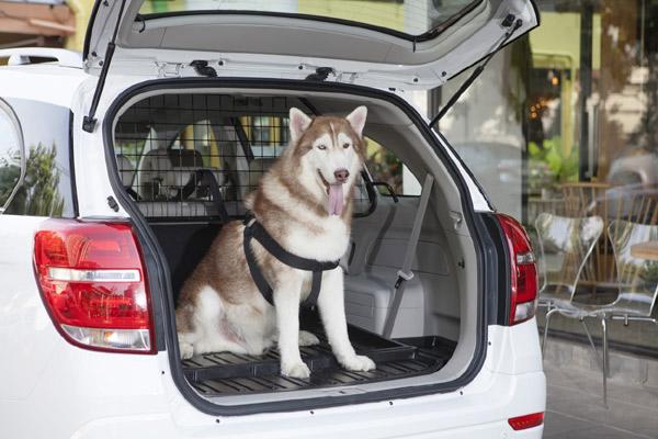 Bepergian dengan anjing. - CHEVROLET