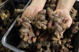 Daftar Obat Herbal Terstandar Bakal Bertambah