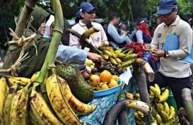 Banten Siapkan 1.000 Hektare untuk Perkebunan Durian dan Pisang