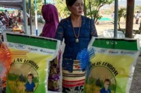 Molas Lembor, Beras Premium Lokal yang Jadi Primadona…