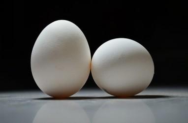 Benarkah Sering Makan Telur Bikin Sakit Jantung?
