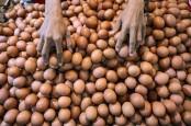 Telur Ayam Tercemar Dioksin,Ditjen PSLB3 Masih Proses Hasil Penelitian
