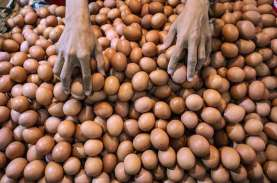 Telur Ayam Tercemar Dioksin,Ditjen PSLB3 Masih Proses…