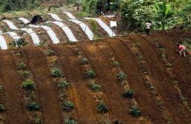 Petani Cabai di Mataram Diajak Adopsi Pola Baru Budi Daya