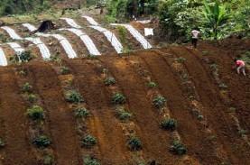 Petani Cabai di Mataram Diajak Adopsi Pola Baru Budi…