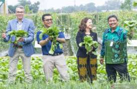 Wamen Pertanian Belanda Nilai Produksi Benih Ewindo