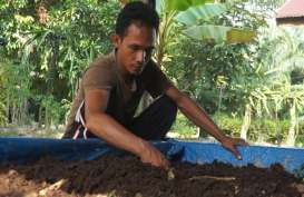 Sukses Membudidayakan Cacing, Kristianto: Ini Bisa Menjadi Alternatif Income Bagi Petani Sawit