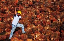 Operasional Industri Minyak Kelapa Sawit di Malaysia Dihentikan