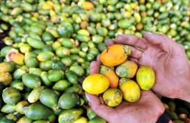 Cek Fakta: Tradisi Makan Sirih Pinang Papua Sebarkan Corona