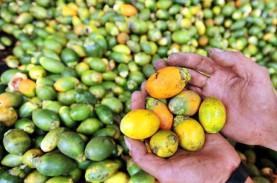 Cek Fakta: Tradisi Makan Sirih Pinang Papua Sebarkan…