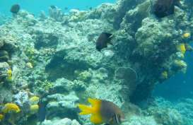 Cegah Penyebaran Corona, Kawasan Wisata Taman Nasional Bunaken Ditutup Sementara
