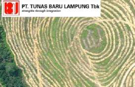 Anak Usaha Tunas Baru Lampung (TBLA) Berpeluang Dapat Kuota Impor Gula Mentah