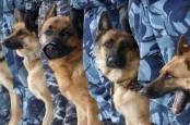 Pelanggar Karantina Dimasukkan ke Kandang Anjing, HRW Kecam Pemerintah Filipina