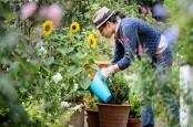 Berkebun Mampu Usir Rasa Bosan di Rumah