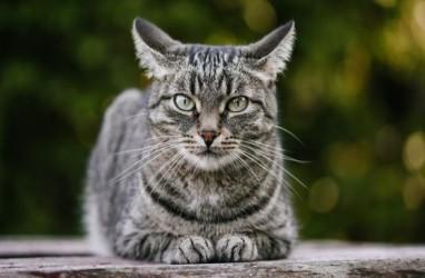 Seekor Kucing Terinfeksi Covid-19, Apa Kata Pakar?