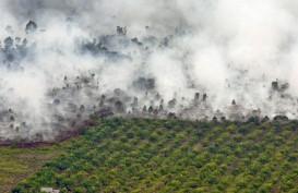 PENANGGULANGAN BENCANA : Lahan Terbakar Riau 996,58 Ha