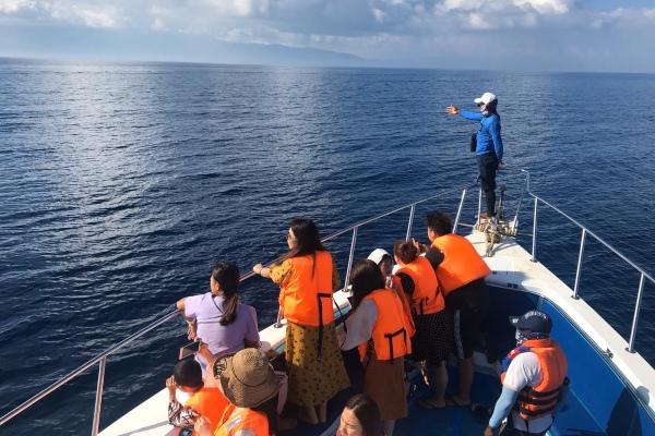 Para pelancong asal China menunggu kemunculan lumba-lumba dalam perjalanan menuju Pulau Gangga, Sulawesi Utara, Kamis (31/1/2020). - Bisnis/M. Nurhadi Pratomo