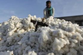 Dukung Industri Tekstil, Produktivitas Kapas Digenjot