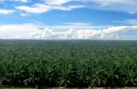 Harga Jual CPO Sampoerna Agro (SGRO) Terkerek