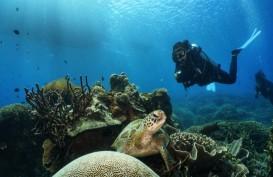 Imbas Covid-19, Industri Wisata Selam Taman Nasional Komodo Tutup