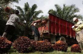 Minyak Kelapa Sawit : Peluang Pacu Ekspor Melayang