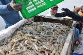 Luhut Serukan Target Ekspor Udang Vaname Tumbuh 250…