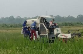 Panen Raya, Petani di Sumsel Terapkan Protokol Pencegahan Corona